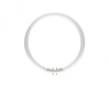 Zářivková trubice Philips Master TL5C circular 22 W / 840 42-219
